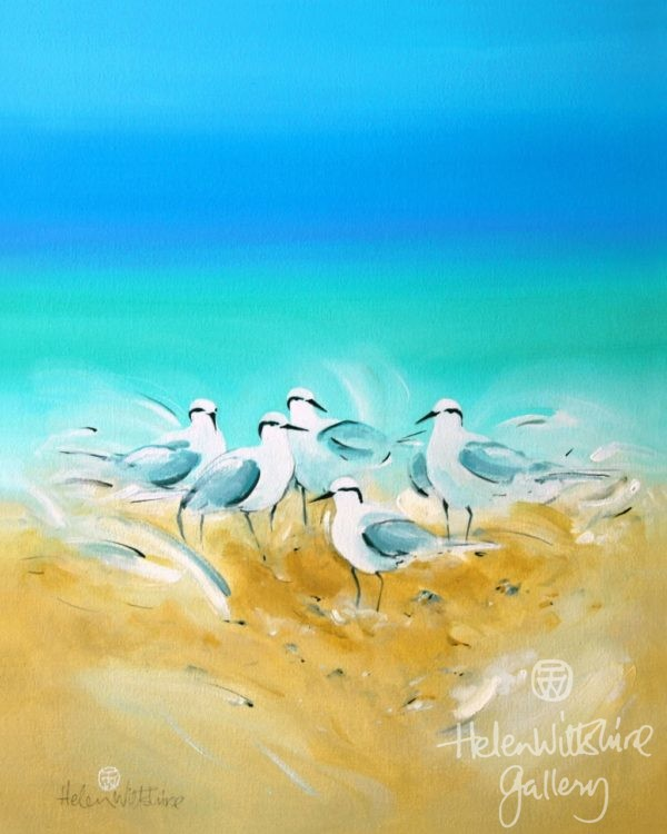 Sand Cay Terns