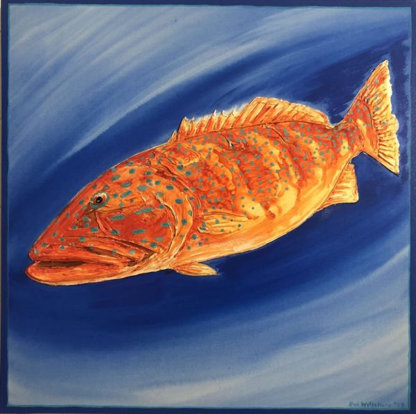 Coral Trout by Ben Wiltshire