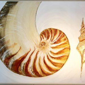 Nautilus by Ben Wiltshire
